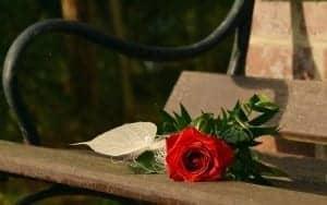 rose-1711237_1920